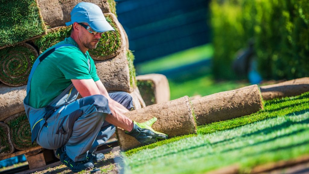 New Turf Grass Installation by Professional Gardener. Rolls of Grass on the Backyard. concept: Landscaping Business Loans
